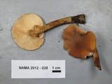 Cystoderma fallax image