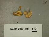 Hygrocybe laeta var. laeta image