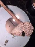 Laccaria trichodermophora image
