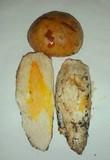 Cortinarius crassus image