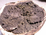 Scleroderma bovista image