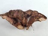 Sarcodon leucopus image