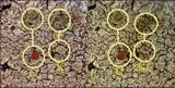 Ochrolechia tartarea image