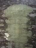 Image of Lepraria umbricola