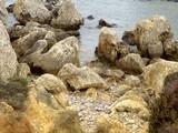 Arthonia calcarea image