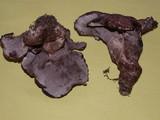 Sarcodon subfelleus image