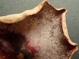 Hypomyces rosellus image