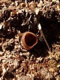 Peziza vesiculosa image