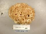 Ramaria subviolacea image
