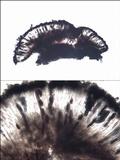 Diplotomma hedinii image