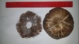 Agaricus bernardiiformis image