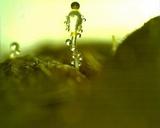 Pilobolus kleinii image