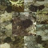 Image of Rinodina sophodes