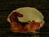 Piptoporus quercinus image