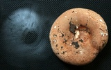 Russula compacta image