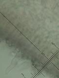 Russula bella image
