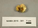 Thuemenella cubispora image