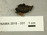 Tatraea macrospora image