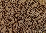 Hapalopilus rutilans image