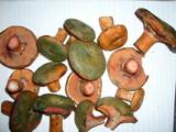Lactarius rubrilacteus image