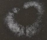 Clitocybe glaucoalba image