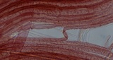 Mycena flavescens image