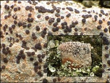 Ainoa geochroa image