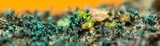 Dendrostilbella smaragdina image