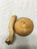 Suillus hirtellus image