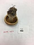 Cortinarius flavifolius image