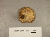 Russula barlae image