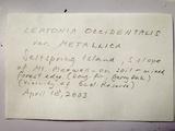 Leptonia occidentalis image