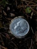 Amanita pantherinoides image