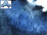 Umbilicaria crustulosa image