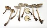 Lepiota flammeatincta image