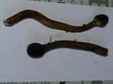 Elaphocordyceps capitata image