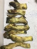 Boletus subluridellus image