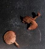 Callistosporium purpureomarginatum image
