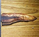 Inonotus quercustris image