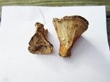 Abortiporus biennis image