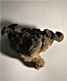 Albatrellus skamanius image