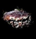Leptoporus mollis image