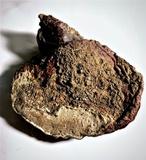Ganoderma valesiacum image