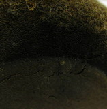 Phellinus hartigii image