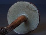 Porphyrellus brunneus image