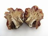Gyromitra caroliniana image