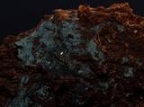 Byssocorticium atrovirens image