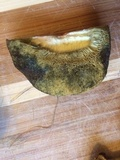 Boletus smithii image