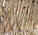 Ganoderma lucidum image