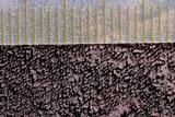 Trichaptum perenne image